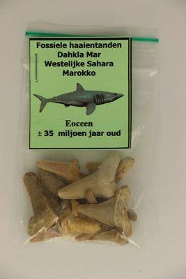 Fossiele haaientanden uit Marokko