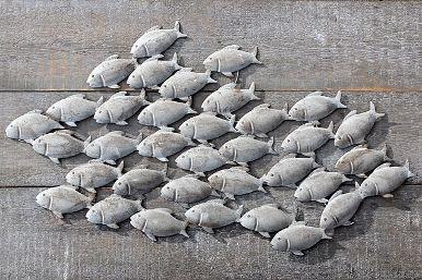 school vissen wanddecoratie 97x55 cm