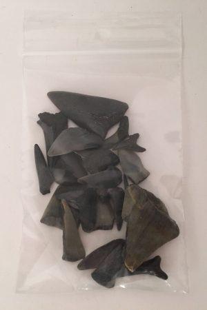 Fossiele haaientanden in zakje - HK0054